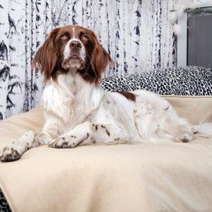 Optymalne legowiska dla psów ze zdrowymi miejscami do leżenia